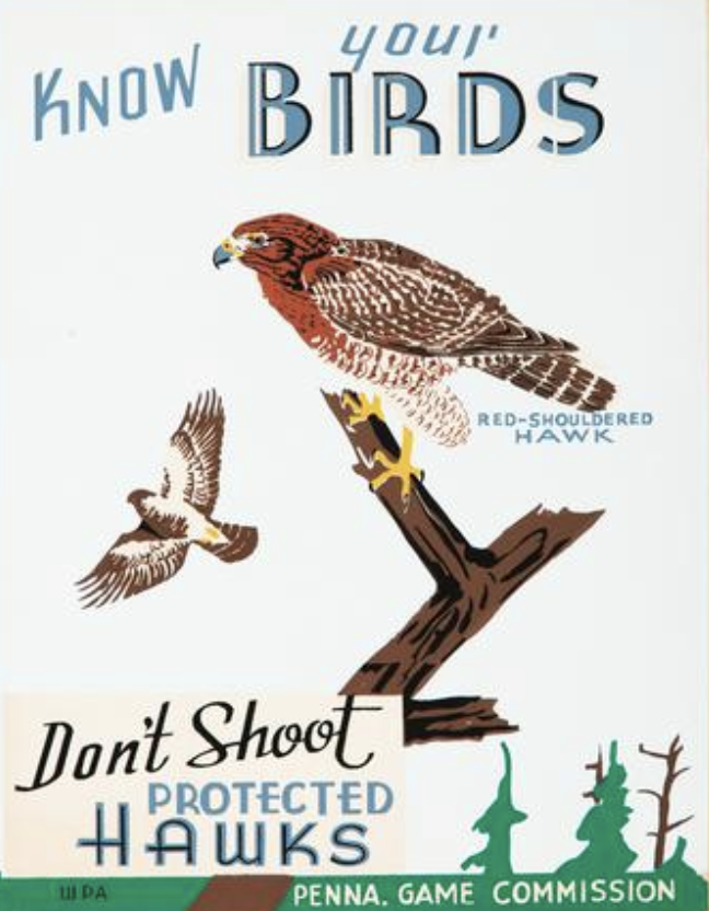 illustrational poster of a bird on a branch and another in air